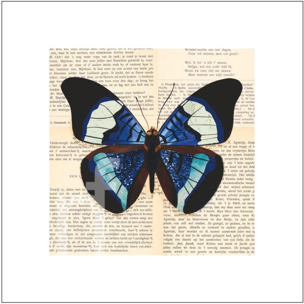 vlinder art print